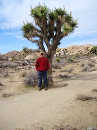 Joshua Tree and Me