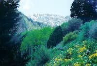 Deseret Peak Wilderness. June...