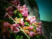 Flowers of Stujack Pass