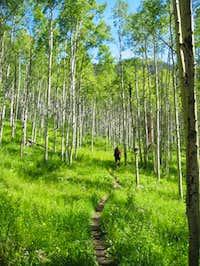 Hiking up the Bighorn Creek...