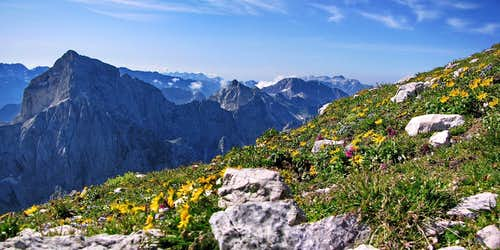 Flowers and Julian Alps