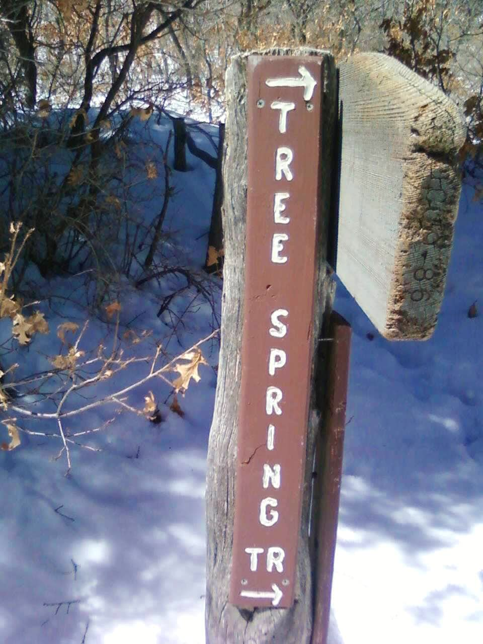Tree Spring Trail