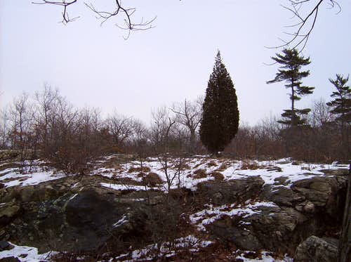 Middlesex Fells in winter