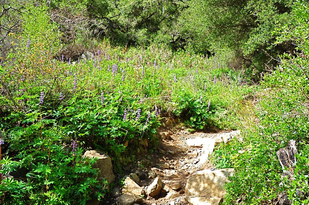 Bed of flowers next to the trail