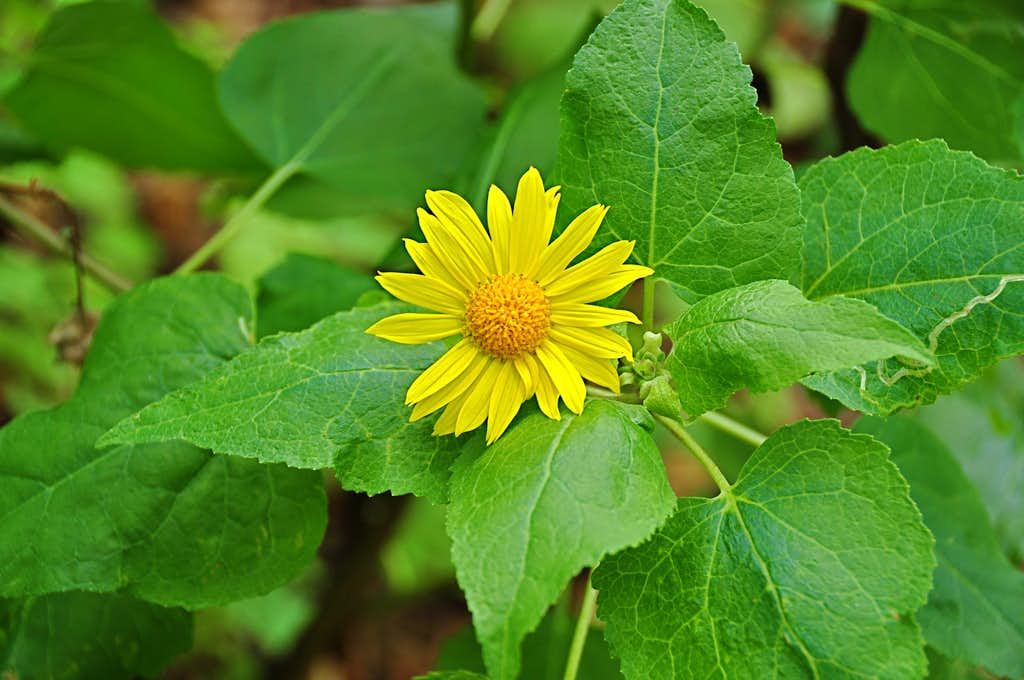 Wild flower next to the trail