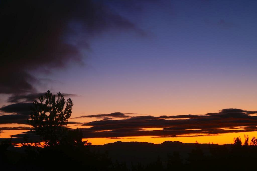 Dawn in the pinewood