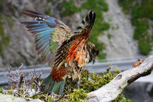 Fauna of New Zealand