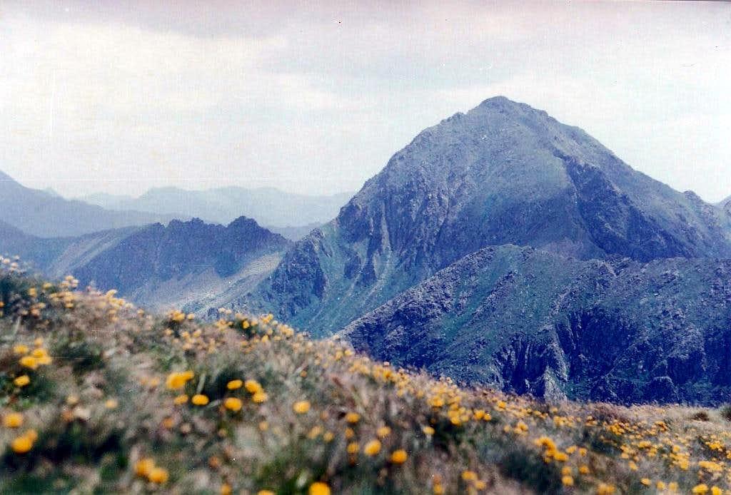 Flowers on summit
