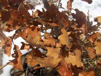 rusty leaves