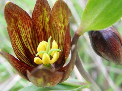 Santa Rosa Plateau Wildflowers