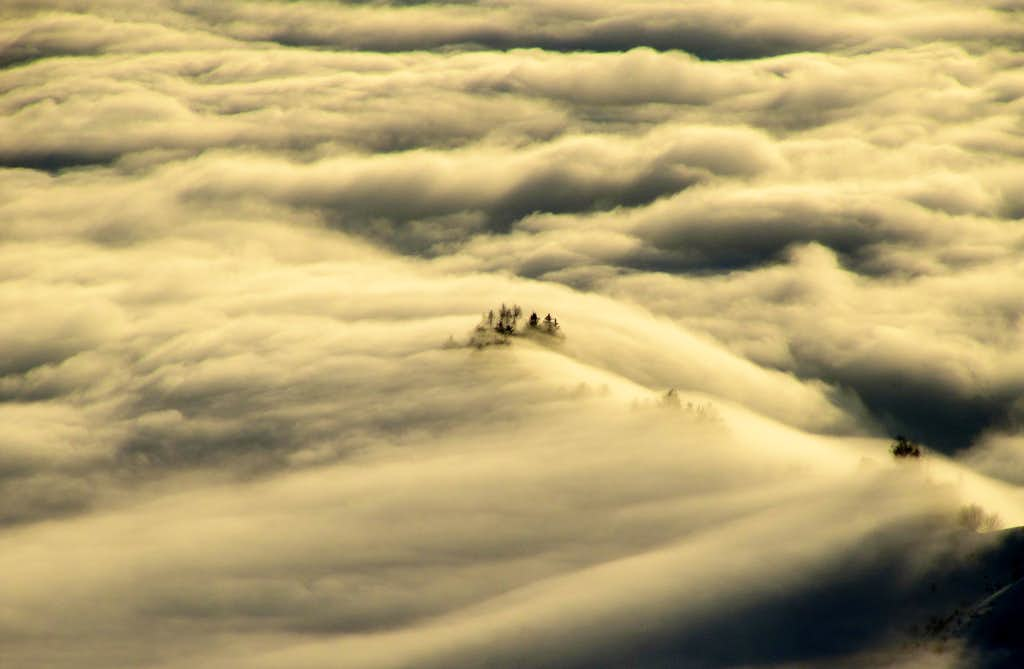 Trees in a Sea of Clouds