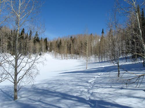 Trail around Dog Lake
