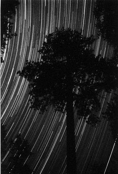 Stars and Jeffrey Pines