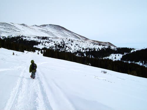 Approaching timberline