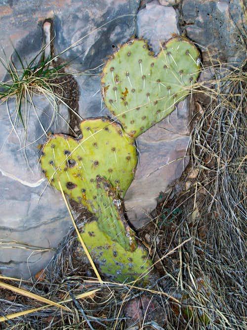 The love cactus......