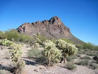 Cat Mountain above the Sonoran