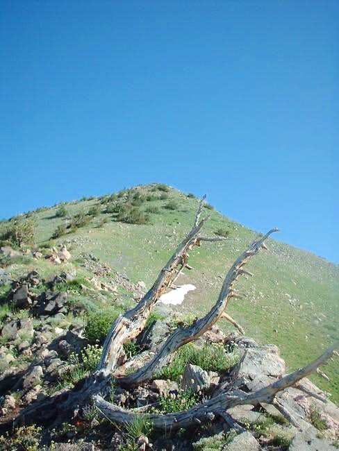 Pic of the summit from the...