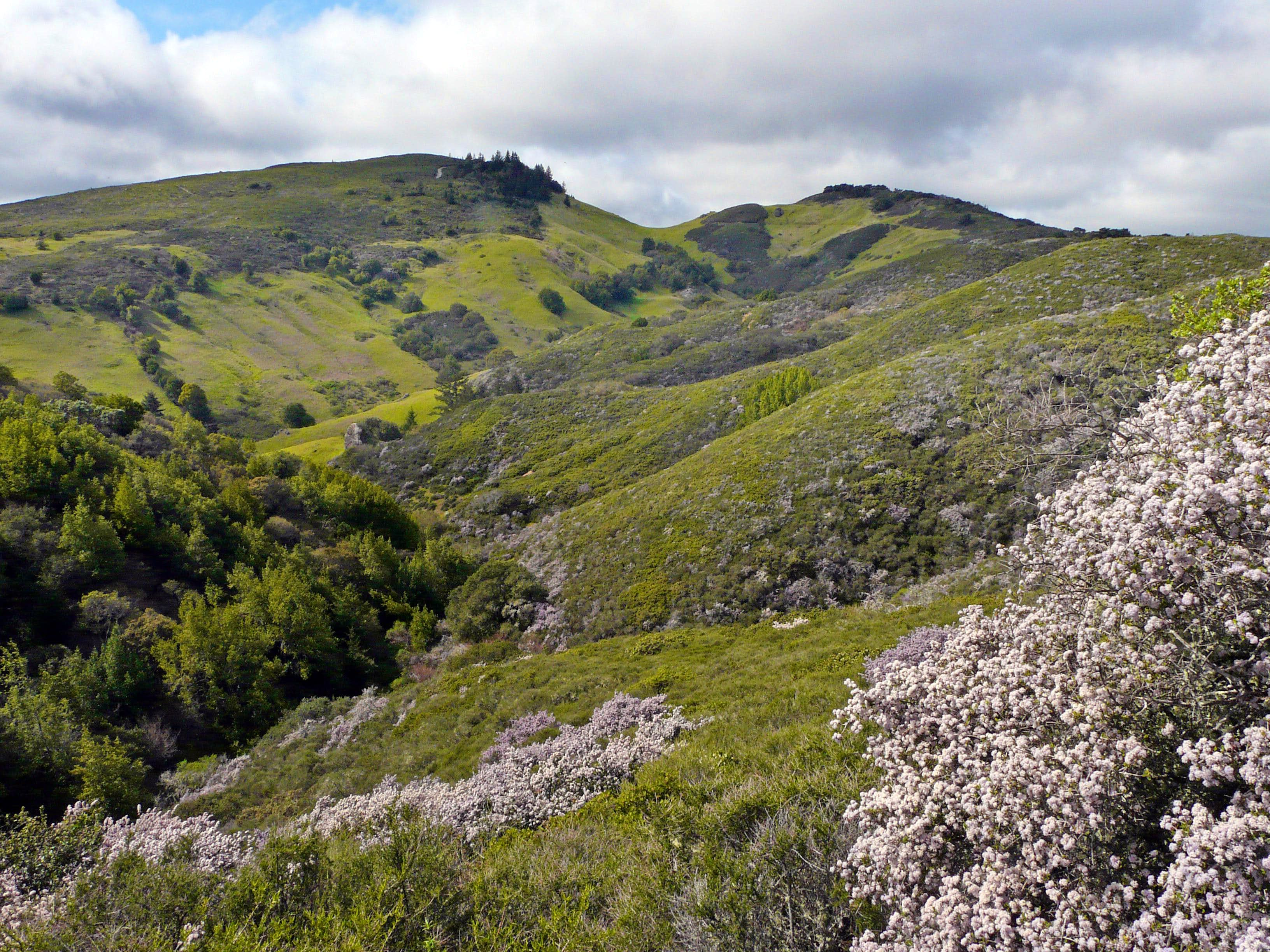 Pine Mountain  (Marin County)