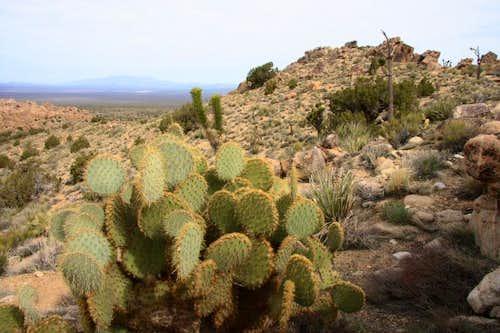 Cactus n rock