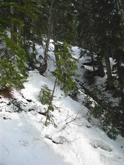 Thick Forest On Storm Ridge