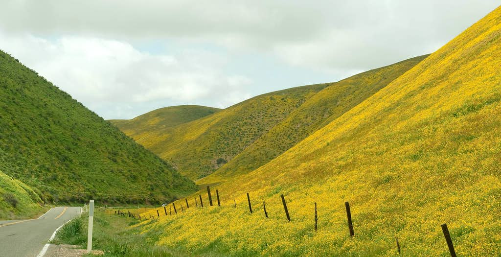 Wildflowers in the Temblor Range
