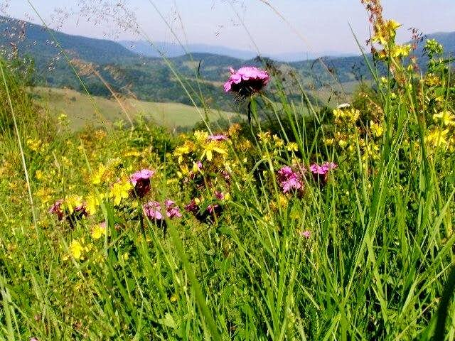 Meadow on the southern slope