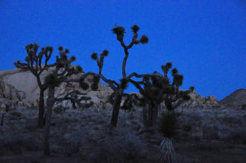 Nightfall in Joshua Tree