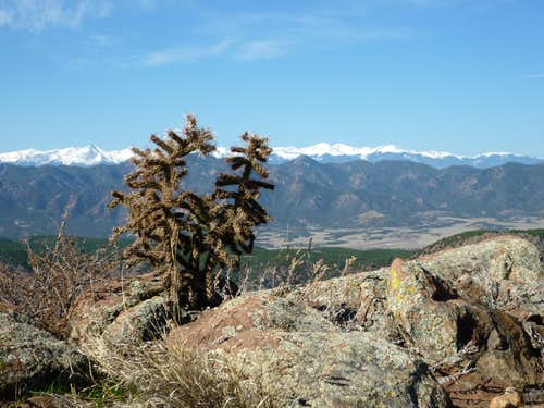 Cholla and mountains