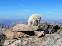 granite goat