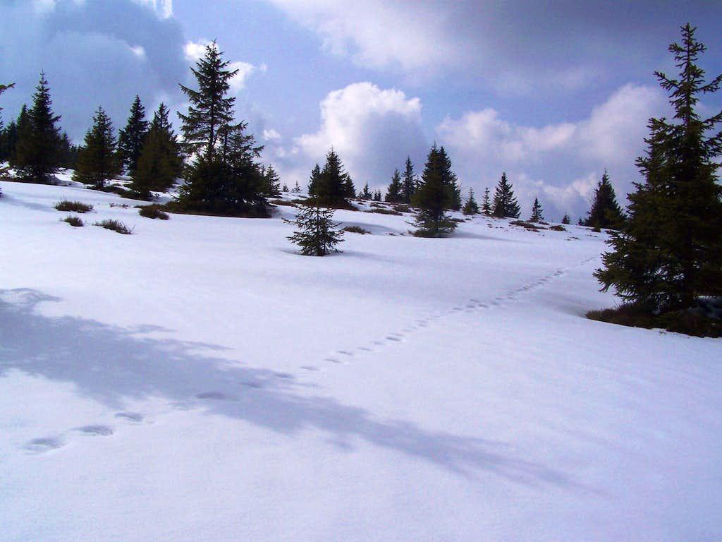 The east slope of Jezerski vrh