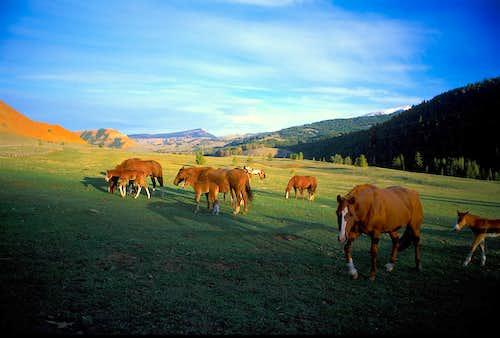 Red Hills Horses