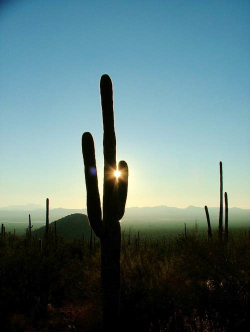 Sunset at the Saguaros.