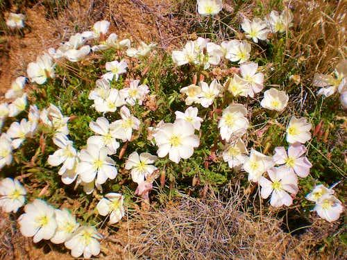 Wildflowers galor!