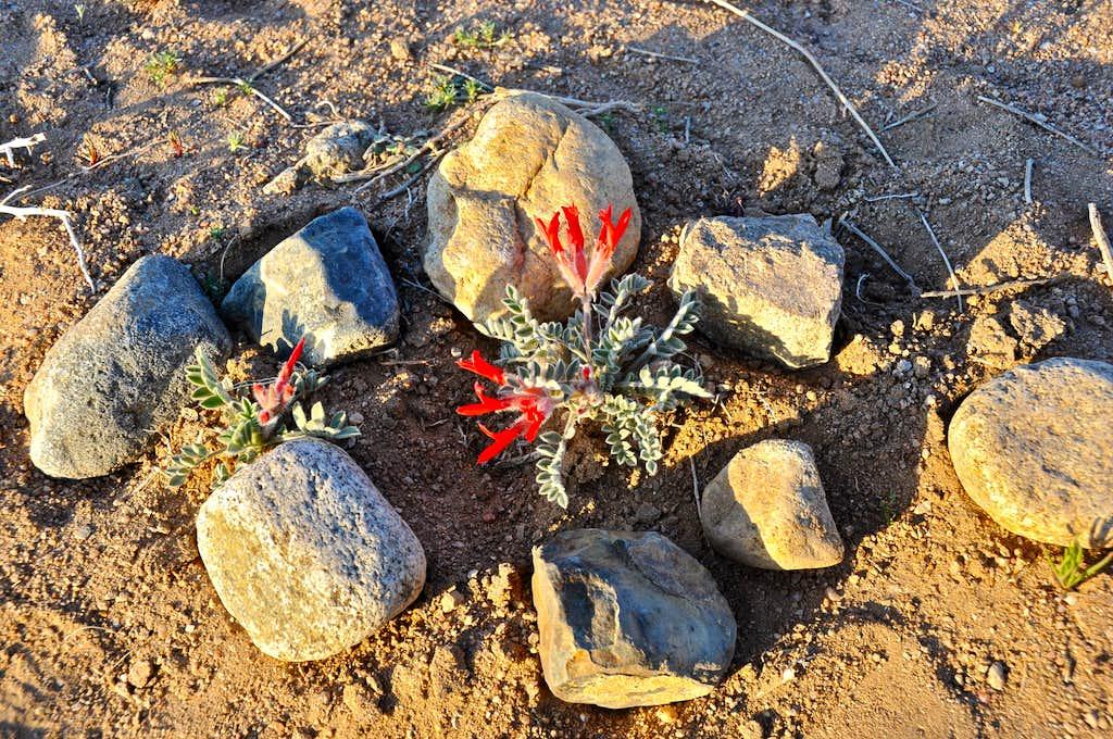 Protecting native plants