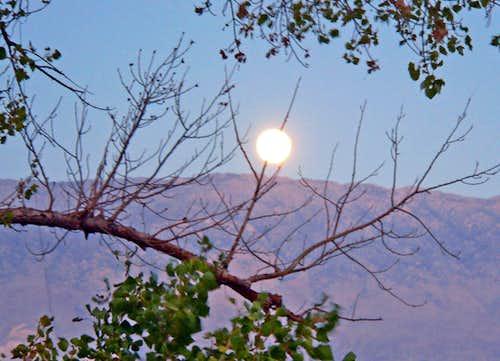 Moon on a twig