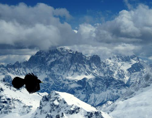 An Alpine Chough & Civetta (3220m)