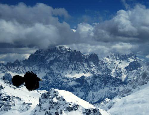 An Alpine Chough & Civetta (3220m)