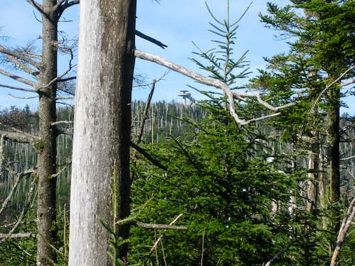 Clingmans Dome 2