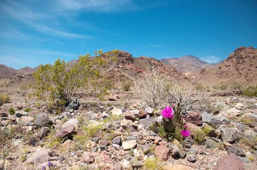 Gorgeous Desert Scenery