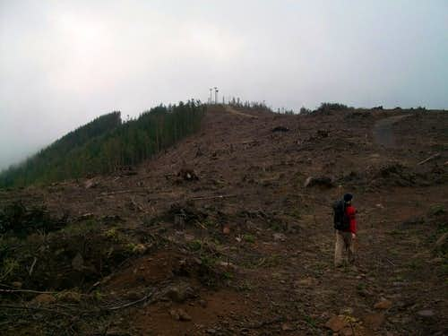 Clearcut on Larch Mountain
