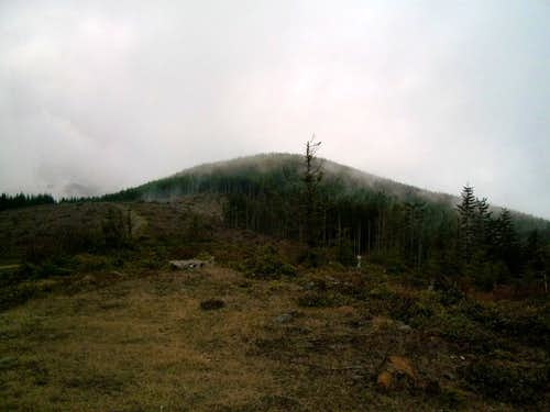 The true summit of Larch Mountain