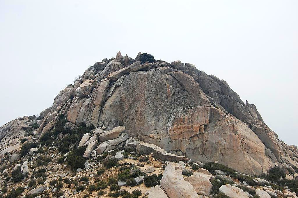 The Thimble North Face