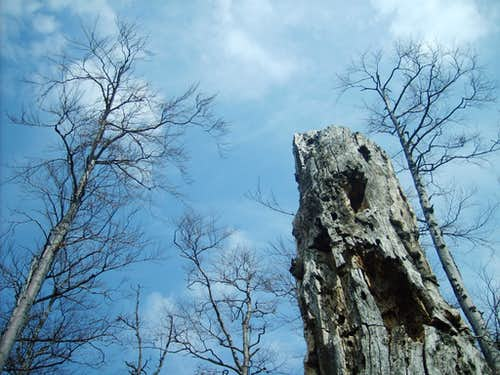 Fatras trees