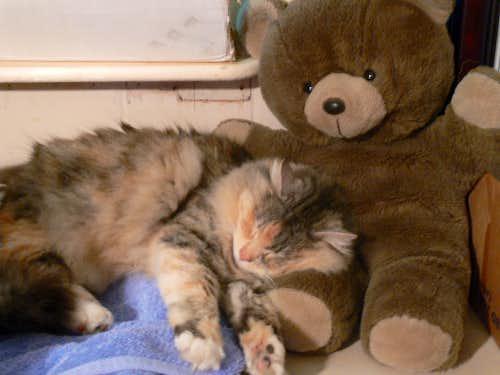 Athena Cuddling a Bear