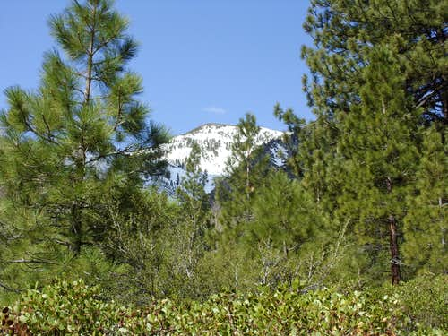 Chocolate Peak through the trees