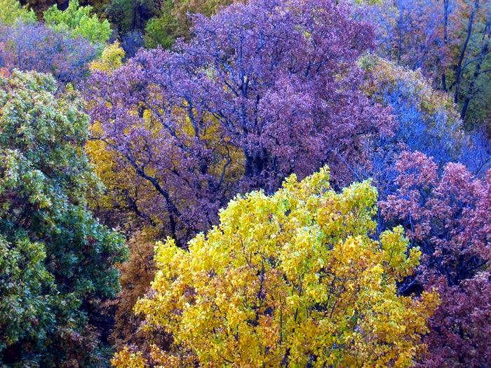 NC fall color
