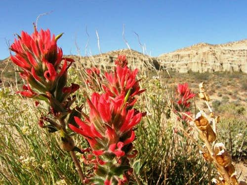 View and Indian Paintbrush