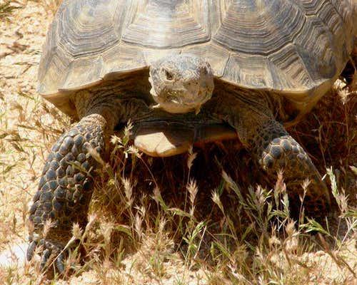 CA Desert Wildlife