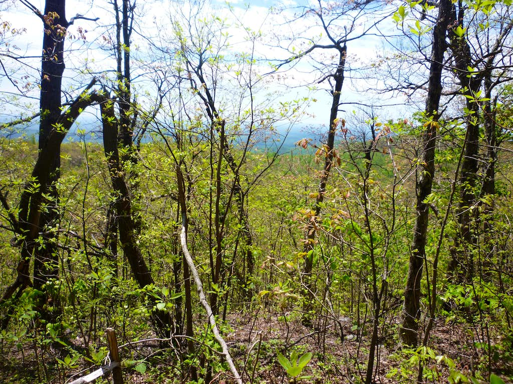 Shrouded views from Hawk Mountain