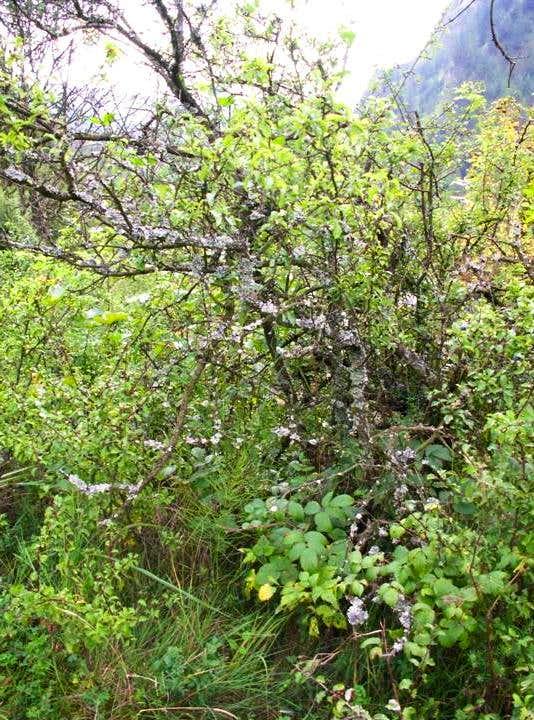 Lichens on...
